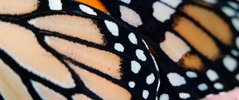 realizzazione Video Concept creativi effetto farfalla